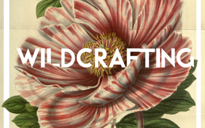 Wildcrafting, What is it?
