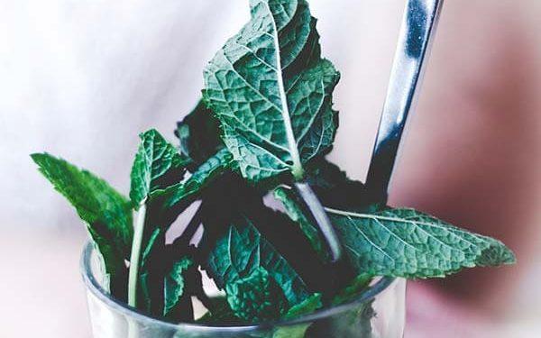 Minty-Memory Tea
